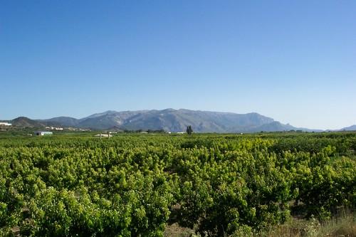 campo de cultivo de albaricoque pliego