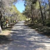Se han llevado a cabo actuaciones de mejora en el camino de acceso al yacimiento de La Almoloya