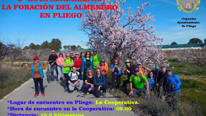 La ruta senderista 'Floración del almendro en Pliego' será este próximo domingo